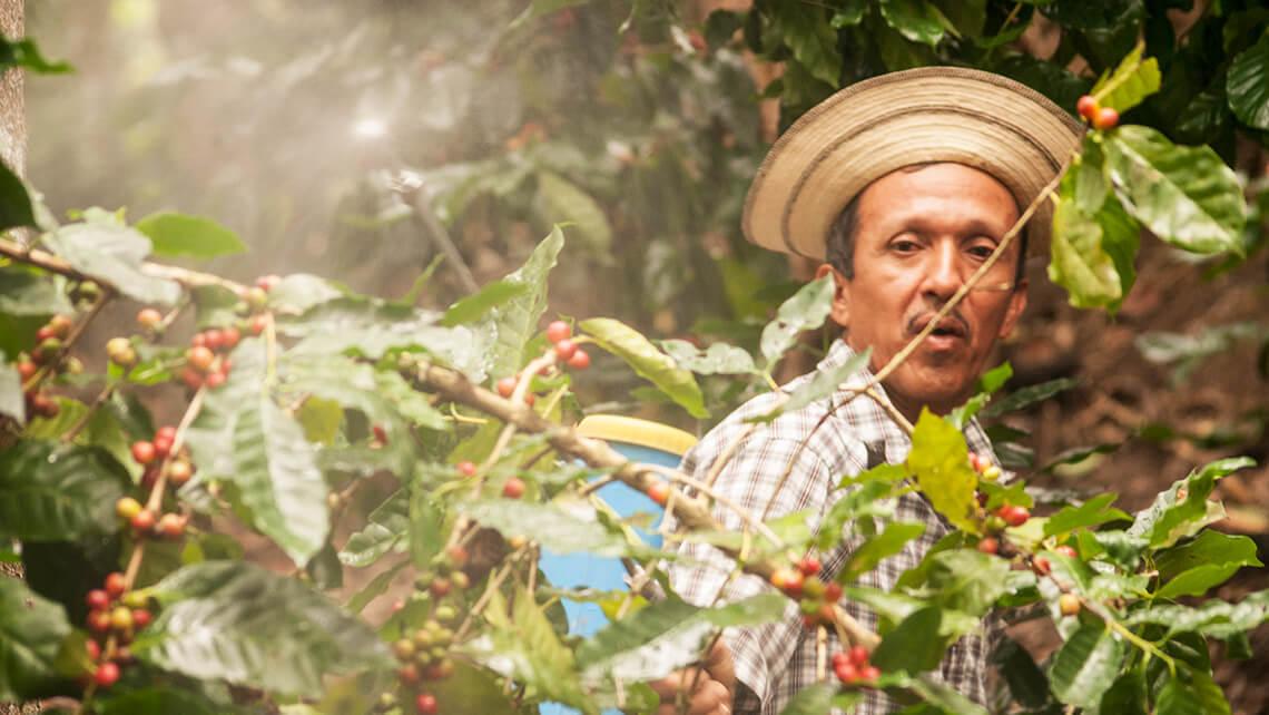 Agricultura de Panamá