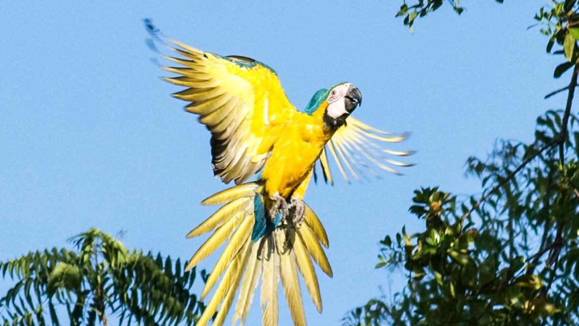 Fauna y Flora de Panamá